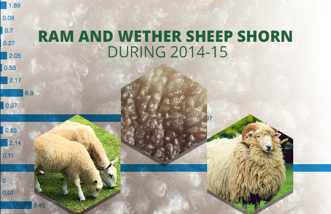 Banner of Ram and Wether Sheep Shorn during 2014-15