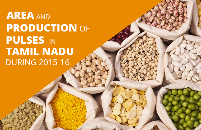 Banner of Area and Production of Pulses in Tamil Nadu during 2015-16