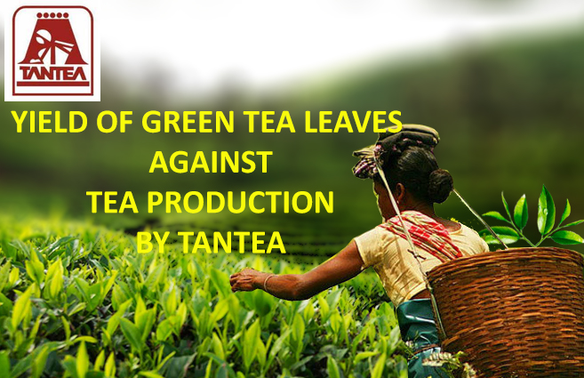 Banner of Yield of Green Tea Leaves against Tea Production by TANTEA