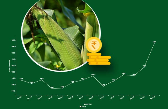 Banner of Average Monthly Wholesale Price of Maize (Kharif Crop) from October-2017 to November-2018
