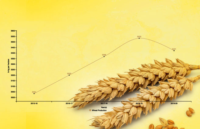 Banner of Wheat Production in India from 2015-16 to 2019-20