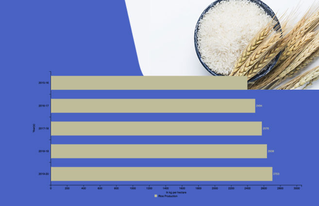 Banner of Rice Production in India from 2015-16 to 2019-20